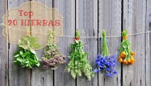20-hierbas-adelgazar