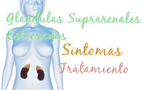 glandulas suprarenales estresadas