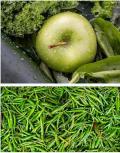Vitamina B para Perder Peso Guia Completa