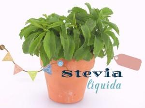 stevia 2