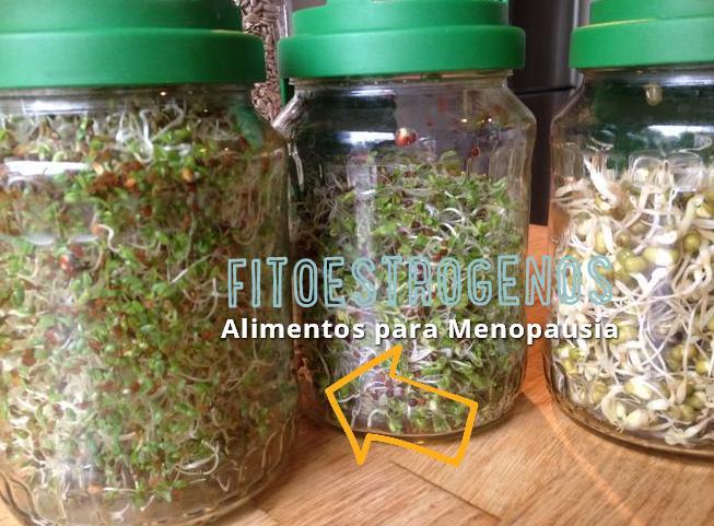 fitoestrogenos menopausia