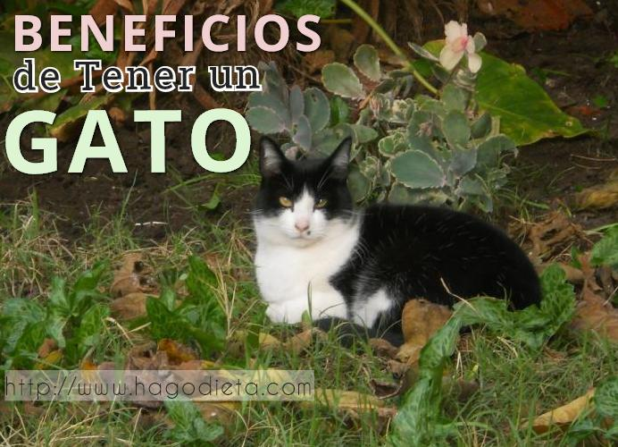beneficios-tener-gato-http-www-hagodieta-com