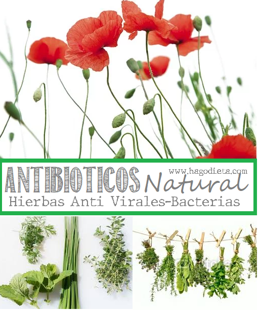 hierbas-antivirales